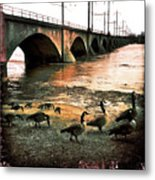 Geese On A Stroll Metal Print