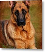 German Shepherd Dog Portrait  Metal Print by Angie Tirado
