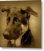 German Shepherd Pup Metal Print