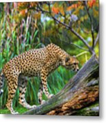 Getting The Scent Metal Print