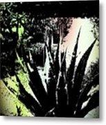 Giant Agave Metal Print