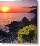 Giant Coreopsis Sunset 2 Metal Print
