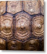 Giant Tortoise Carapace Metal Print