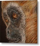 Gibbon Metal Print by Karen Ilari
