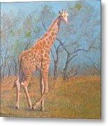Giraffe - Safari - Summer 2008 Metal Print