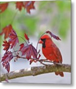 Give Me Shelter - Male Cardinal Metal Print