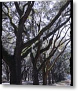 Glorious Live Oaks With Framing Metal Print