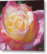 Glorious Pink Rose Metal Print