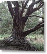 Gnarled Oak Metal Print