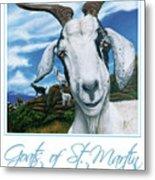 Goats Of St. Maarten- Andre Metal Print