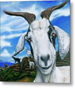Goats Of St. Martin Metal Print