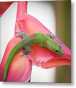 Gold Dust Day Gecko 2 Metal Print