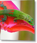Gold Dust Day Gecko 3 Metal Print