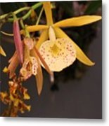 Gold Yellow Orchid  Metal Print