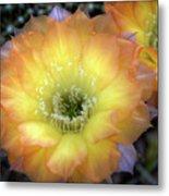 Golden Cactus Bloom Metal Print