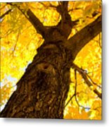 Golden Climb Metal Print
