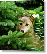Golden Red Wolf Metal Print