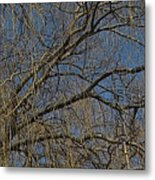 Golden Treetop Metal Print