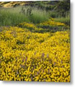 Goldfields And Grasses Metal Print