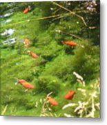 Goldfish In A Pond Metal Print