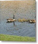Goose Pond 1 Metal Print