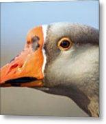 Goose Portrait Metal Print