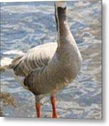 Goosey Goosey Gander... Metal Print