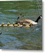 Goslings In A Row Metal Print
