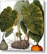 Gourd, Taro, & Pumpkin Metal Print