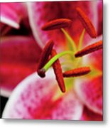 Graceful Lily Series 21 Metal Print