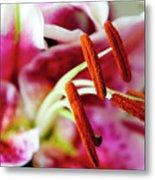 Graceful Lily Series 23 Metal Print