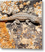 Grand Canyon Lizard Metal Print