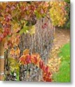 Grape Vines In Fall Metal Print
