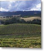Grape Vines On Opolo Vineyards Metal Print