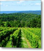 Grapevines On Old Mission Peninsula - Traverse City Michigan Metal Print