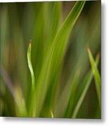Grass Abstract 1 Metal Print