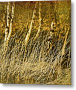 Grass And Birch Metal Print