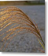 Grassflowers In The Setting Sun Metal Print