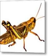 Grasshopper I Metal Print