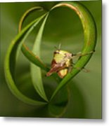 Grasshopper Twist Metal Print