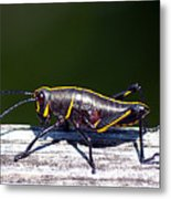 Grasshopper Nymph Metal Print