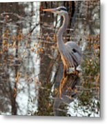 Great Blue Heron And Reflection Metal Print