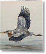 Great Blue Heron Flying Metal Print