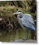 Great Blue Heron On The Watch Metal Print by George Randy Bass