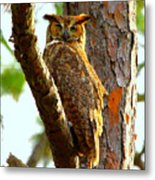 Great Horned Owl Wink Metal Print