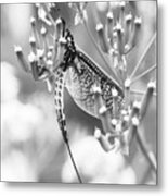 Great Wings  Black And White Dragonfly Metal Print