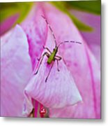 Green Bug On Rose Petal Metal Print