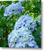 Green Nature Landscape Art Prints Blue Hydrangeas Flowers Metal Print