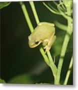 Green Tree Frog On Hibiscus Metal Print