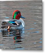 Green-winged Teal Metal Print